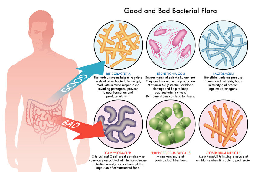 importance-of-probiotics